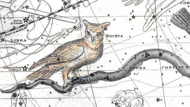 Noctua Constellation