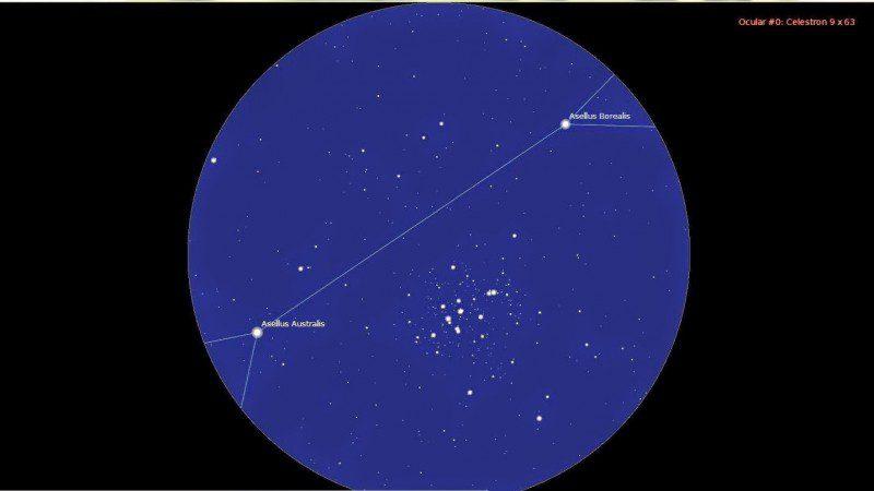 Asellus Australis Star, Delta Cancri