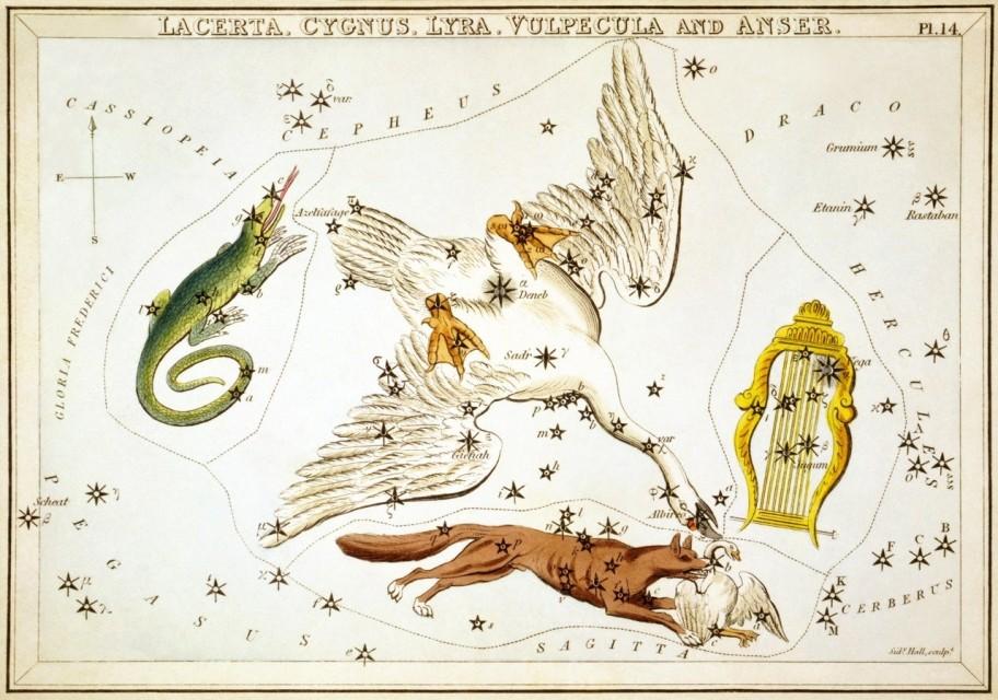 Constellation Cygnus Astrology