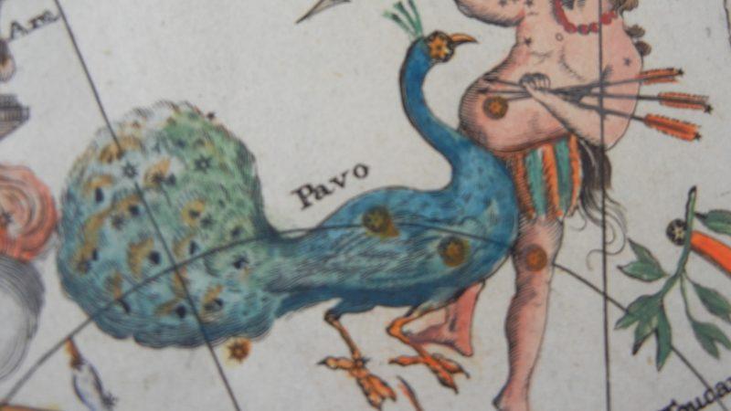 Constellation Pavo