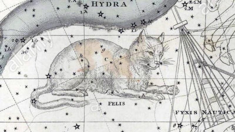 Fixed Star Felis
